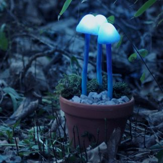 Mushroom light at night