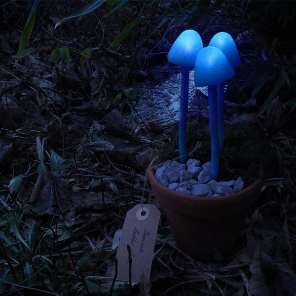 Mushroom light at night in nature